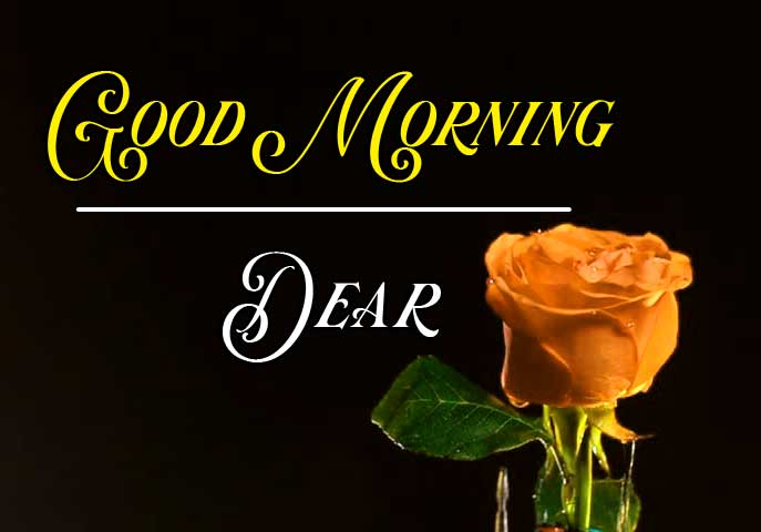 Best Good Morning Images HD Pics Wallpaper photo With Rose