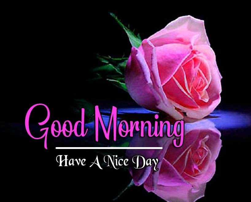 Red RoseBest Good Morning Images Pics Wallpaper Download