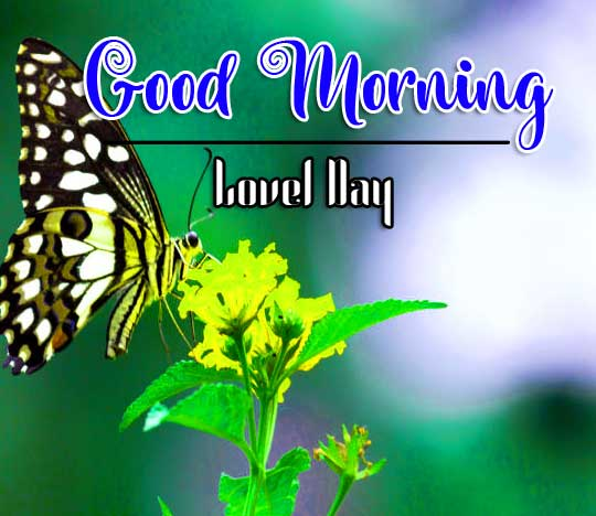 Best Good Morning Images Photo Pics Download for Facebook / Whatsapp
