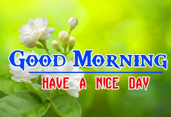 1244+ Special Good Morning Images HD { New Collection }
