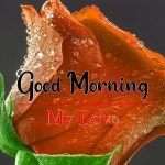 Latest Flower Good Morning HD Wishes