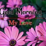 Latest Flower Good Morning Photo Pics