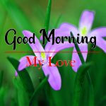 Latest Flower Good Morning Wishes