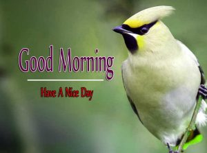 Monday Good Morning Wishes Pictures