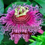 Monday Good Morning Wishes Images Download Free