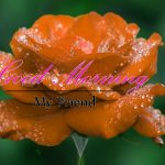 Monday Good Morning Wishes Wallpaper Free