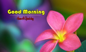 Monday Good Morning Wishes Pics Download Free