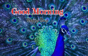Monday Good Morning Wishes Pics Photo Download