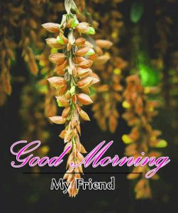 Monday Good Morning Wishes Pics Download New