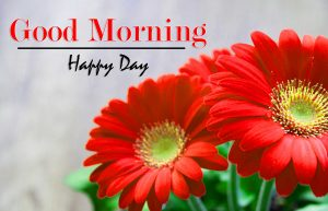 Flower Monday Good Morning Wishes pics Download