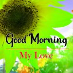 New Latest Flower Good Morning Wishes