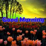 Nice Flower Good Morning Images Photo