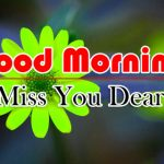 Nice Flower Good Morning Photo Download