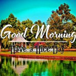 Photo Free Download Good Morning