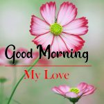 Pics Flowers Good Morning Images
