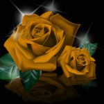 Girlfriend / Wife Red Rose Wallpaper Download Free