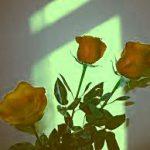 Girlfriend / Wife Red Rose Wallpaper Download