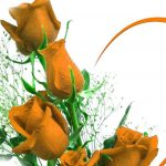 Girlfriend / Wife Red Rose Pics Free Download