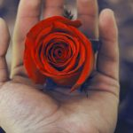 Girlfriend / Wife Red Rose Pics Download