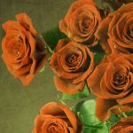 Girlfriend / Wife Red Rose pics Wallpaper Free
