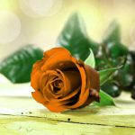 Girlfriend / Wife Red Rose Pics Download Free