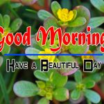 Special Good Morning Free Wallpaper Pics