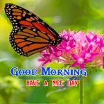 Special Good Morning Hd Free Photo Pics Download