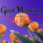 Top Flower Good Morning Hd Free Download