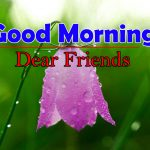 Top Flower Good Morning Images Pics