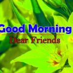 Top Flower Good Morning Photo Free Download
