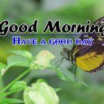p Good Morning Pics