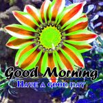 Good Morning Images photo hd