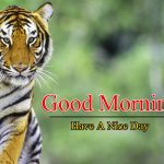 Best Animal Good Morning Photo Images Download