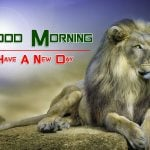 New HD Free Best Animal Good Morning Images Download