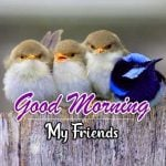 Best Animal Good Morning Wallpaper pics Download Free