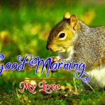 Best Animal Good Morning Images Free for WHATAPP