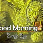 Best Animal Good Morning Images Pics Download