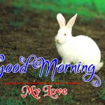 Best Animal Good Morning Pics photo Download