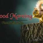 Best Animal Good Morning Wallpaper Pics Download