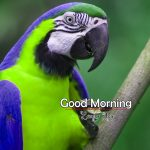 Best Animal Good Morning pics Wallpaper Download
