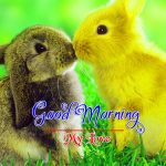 Best Animal Good Morning Images Free Download