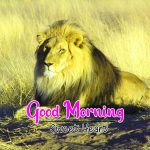 Best Animal Good Morning Pics Download