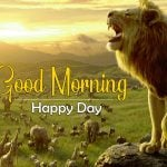 Latest Best Animal Good Morning Images Download