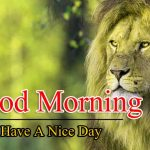 Best Animal Good Morning Pictures Download