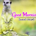Best Animal Good Morning Wallpaper Free Download