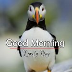 Best Animal Good Morning Pics Free Download