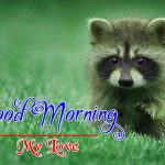 Best Animal Good Morning Wallpaper Images HD