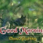 Best Animal Good Morning Photo Download