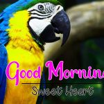 Best Animal Good Morning Pics Images Download