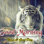 New Free Best Animal Good Morning Images Download